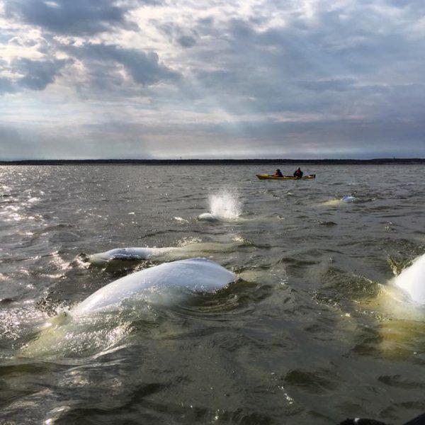 Kayak © Discover_churchill
