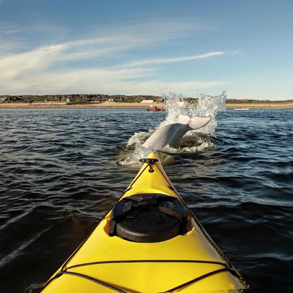 Kayaking - Sea North Tours