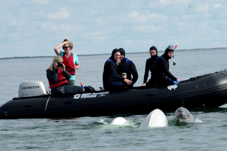 zodiac-snorkeling