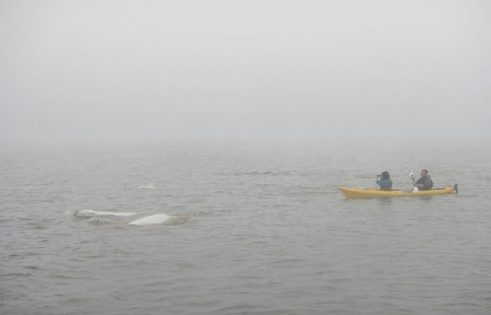 kayaking-belugas-foggy-day