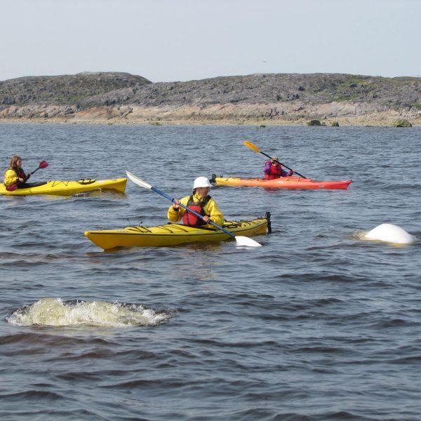 kayaking-group-Dwight-Allen_small